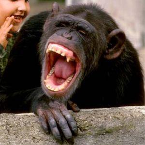 μαϊμού που γελάει