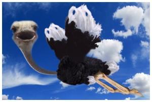 Εικόνα Στρουθοκάμηλος Πέφτει Από Τα Σύννεφα