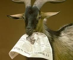Κατσίκα τρώει εφημερίδα